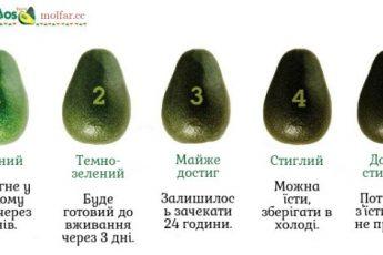 Стадії дозрівання авокадо
