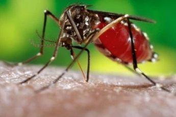 Що таке лихоманка денге